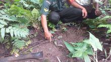 Jejak Harimau Dekat Pemukiman Bikin Resah Warga di Kudu Gantiang Padang Pariaman
