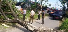 Angin Kencang di Padang, Pohon Tumbang Timpa Pagar Rumah dan Hambat Jalan