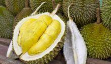 Wow Asyik... Sumbar akan Gelar Ekspo dan Kontes Durian Terbesar