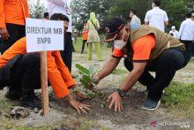 Mitigasi Tsunami, BNPB Tanam Seribu Pohon Pinago di Pesisir Pantai Pariaman