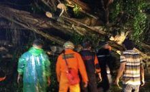 Limapuluh Kota dan Payakumbuh Diterjang Badai, Banyak Pohon Tumbang, Puluhan Bangunan Rusak