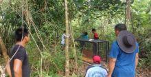 BKSDA Pasang Perangkap untuk Menangkap Harimau yang Serang Ternak Warga di Pasaman