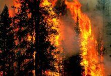 Dari 2 Juta Hektare Lahan dan Hutan yang Terbakar, Baru 50 Ribu Hektare