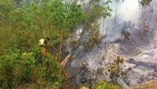 Gawat, 2 Hari 2 Malam Ribuan Pohon Karet Warga Lintau Buo Terbakar