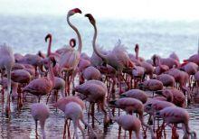Fenomena Migrasi Burung di Sumbar Menarik untuk Dijadikan Objek Wisata