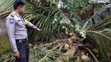 Temani Cucu Cari Buah Seri Saat Angin Kencang, Nenek Tewas Tertimpa Pohon Kelapa di Tanah Datar