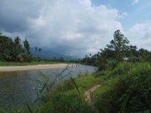 Meriahkan Alek Nagari, Warga Ambacang Anggang Pasaman Ini akan Panen Ikan Larangan di Batang Sumpu