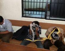 Nyaris Tawuran di GOR Agus Salim Padang, Sekelompok Murid SD Diamankan Satpol PP