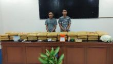 Polres Padang Pariaman Temukan 66 Kg Ganja dalam Kandang Ayam, 2 Pelaku Ditangkap