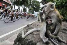 Nasib Tour de Singkarak Saat Seluruh Ranah Minang Berselimut Kabut Asap