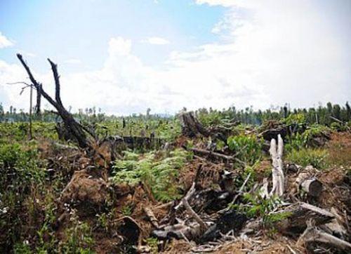 Orang Minang Sibuk Merantau, Hutan di Kampung Halamannya Mulai Digunduli Pengusaha