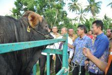 Sumatera Barat Targetkan Pengembangan Sapi Potong Hingga 2 Juta Ekor