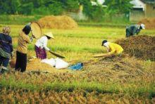 Data BI, Kesejahteraan Petani Sumbar Masih di Bawah Rata-rata Nasional