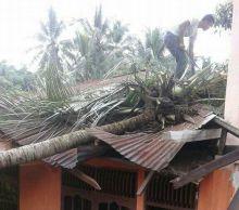 Hujan dan Angin Kencang Landa Solok, Sebuah Rumah Rusak Ditimpa Pohon Kelapa