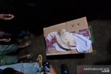 Warga Pesisir Selatan Sumbar Temukan Jasad Bayi di Tepi Sungai