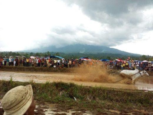 Wah, Ribuan Warga Saksikan Pacu Jawi di Sungai Tarab Tanah Datar