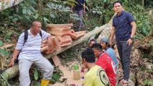 Tebang Kayu di Cagar Alam Maninjau, Empat Warga Diamankan Polisi