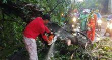 Hujan Deras dan Angin Kencang di Kota Padang, Banyak Pohon yang Tumbang