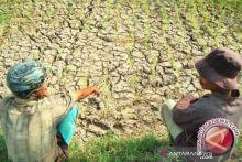 Kemarau, Petani Keluhkan Saluran Irigasi yang Tidak Kunjung Diperbaiki